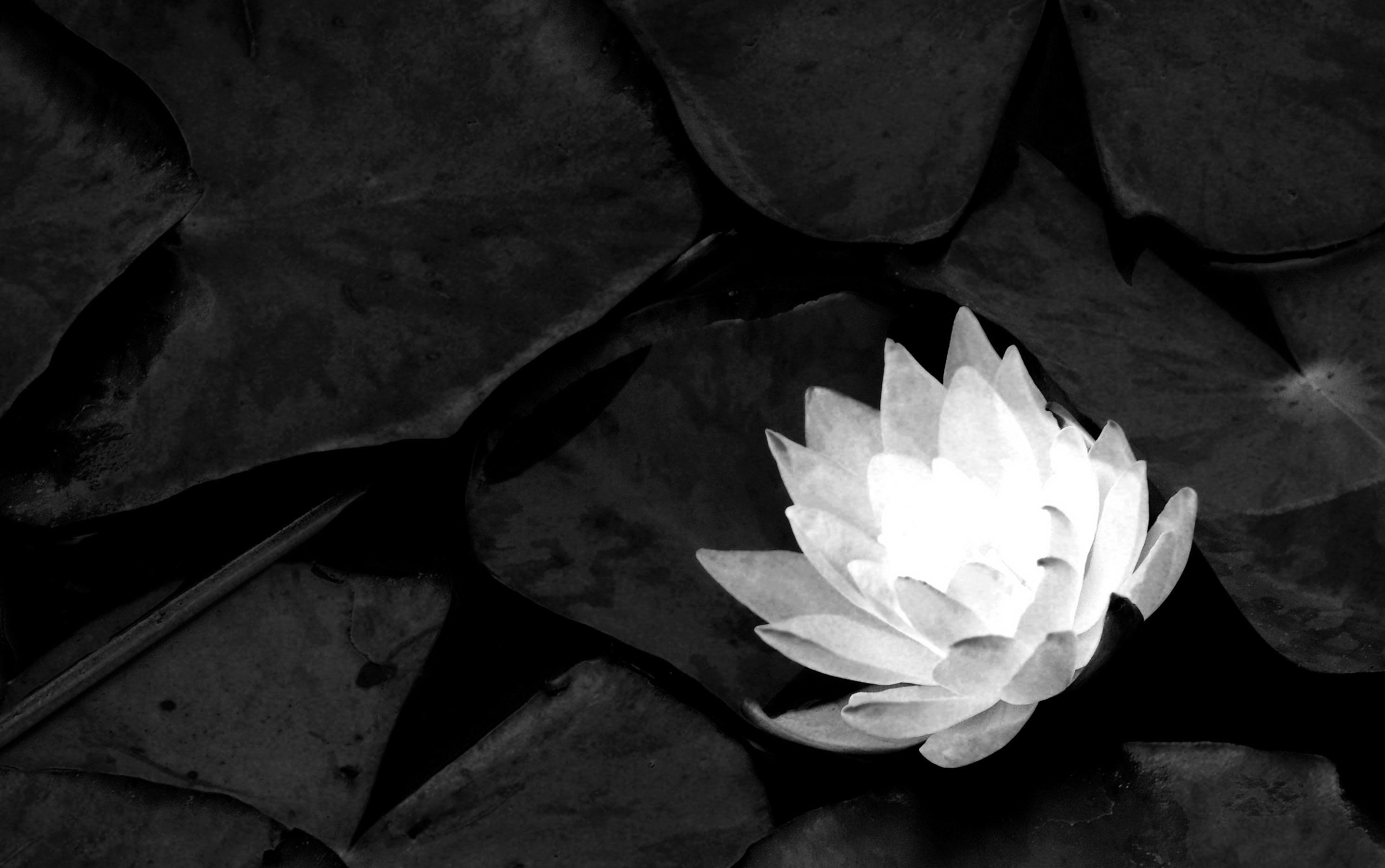 meditacion_0.jpg