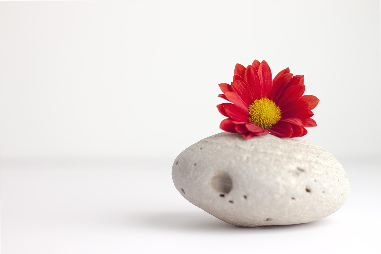 flor y piedra